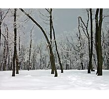 Crystallized trees in snowy Dobogókő, Hungary Photographic Print