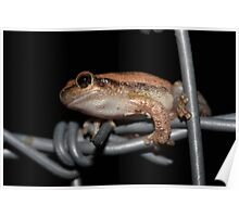 Outback Frog Poster