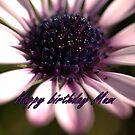 Birthday Card -1 by Rosemaree