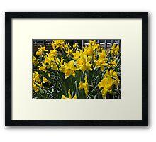 The Bounty of Spring Framed Print
