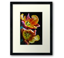 Orange Parrot Tulips Framed Print