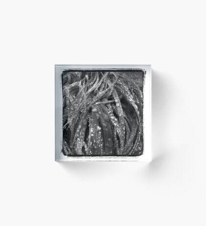 Leafs Acrylic Block