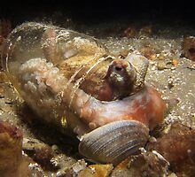 Pickled Octopus. by James Peake Nature Photography.
