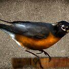 Mr. Robin by Kimberly Palmer