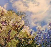 Cattus Island   /  Flowering Trees    by Rick  Todaro
