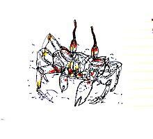 Cocos Crab Photographic Print
