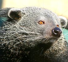 Random Binturong