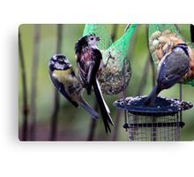 Even birds have bad hair days Canvas Print