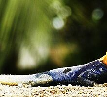 Cameroon Lizard by 23kurtz