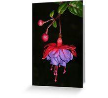 Ever So Pretty - Fuscia Greeting Card