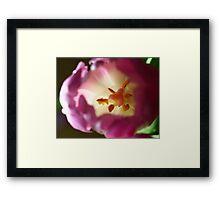 Pink Tulip flower Framed Print