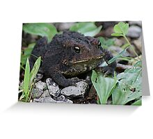 Mr Toad Greeting Card