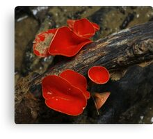 Scarlet Cup Canvas Print
