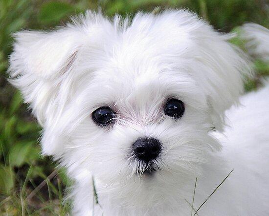Cute by campbellart
