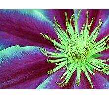 Beauty Up Close Photographic Print