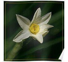 ~ Bloom ~ Poster