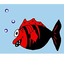 Black and red funny fish  Photographic Print