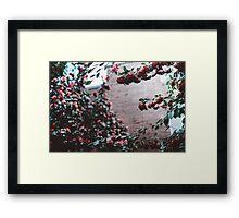 seattle flowers. Framed Print