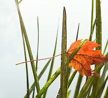 Leaf and Reeds by Reno Unger