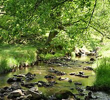 The Beck in Primrose Gill by Lindamell