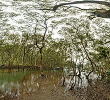 Mangroves at Glades Bay Park, Gladesville by Roger Barnes