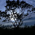 tree in silhouette by qshaq