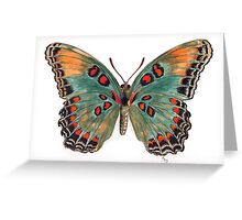 Limenitis astyanax, the Red-spotted Purple Greeting Card