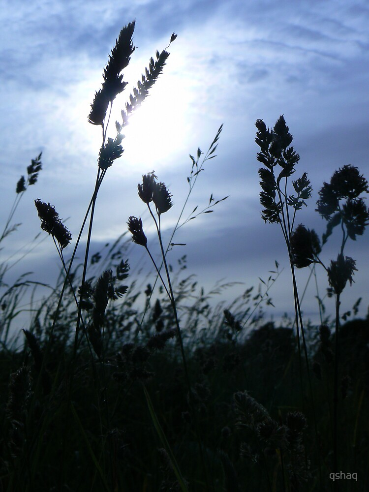 Grass in Silhouette by qshaq