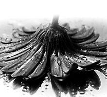 Flower #2 in Black and White. by ikshvaku