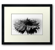 Flower #2 in Black and White. Framed Print