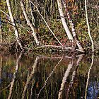 Reflections of Autumn by Kerry Dunstone