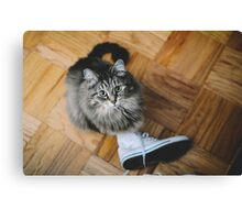 seattle cat. Canvas Print