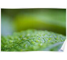 Macro leaf... Poster