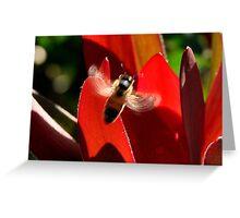 "photoj ""Bug Time-In Flight"" Greeting Card"