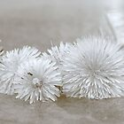 Floating Dandelions by Heather Caye