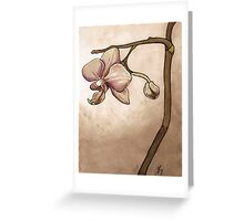 Orchid II Greeting Card