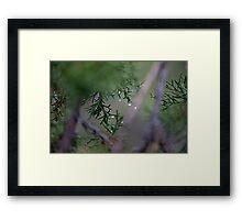 Macro Wet Evergreen Framed Print