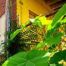 Green Plant, Yellow Building by sadeyedartist