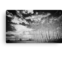 Manning River Drive Canvas Print
