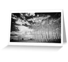 Manning River Drive Greeting Card