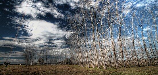 Manning River Drive HDR by Matthew Jones