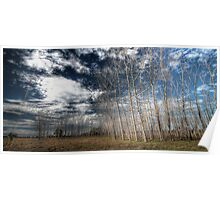 Manning River Drive HDR Poster