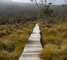 The Path by andrew higgins