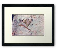 Trilobite and bryozoan fossils from Usk, Monmouthshire Framed Print