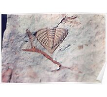 Trilobite and bryozoan fossils from Usk, Monmouthshire Poster