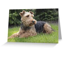 Loud Welsh Terrier Greeting Card