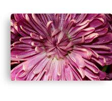 A pink flower. Canvas Print