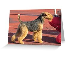 Furry Welsh Terrier Greeting Card