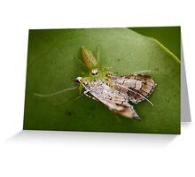 The food chain Greeting Card
