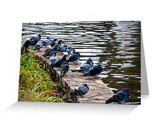 PigeonsLOL Greeting Card